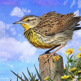 Summer And A Meadowlark by R christopher Vest