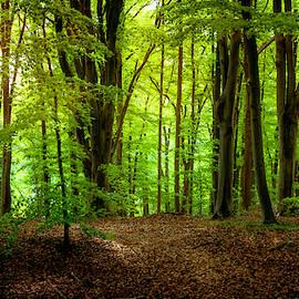 Summer Forest by Nicklas Gustafsson