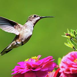 Summer Hummingbird Love by Christina Rollo