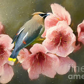 Summer Waxwing  by Tina LeCour