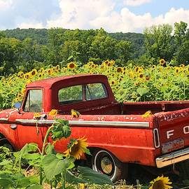 Summertime and Sunflowers by Living Color Photography Lorraine Lynch