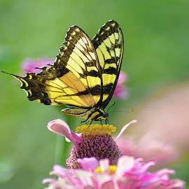 Summertime Butterfly by Bill Cannon