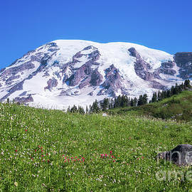 Summertime View Of Mt Rainier by Sharon Seaward