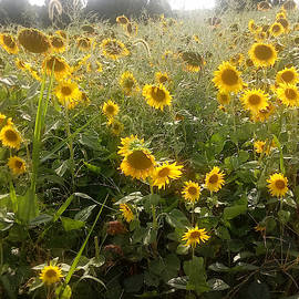 Sun and Sunflowers by Kathy Barney