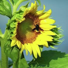 Sun Bee by Larry Kniskern