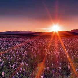 Sun Rays at Camas Prairie by Leland D Howard