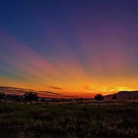Sun rays in the morning by Lynn Hopwood