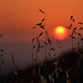 Sun through the spikes by Guido Montanes Castillo