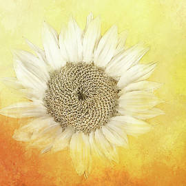 Sunflower Abstracted by Terry Davis