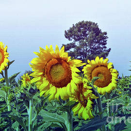 Sunflower Delight by Lydia Holly