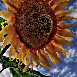 Sunflower sky by Jolanta Anna Karolska