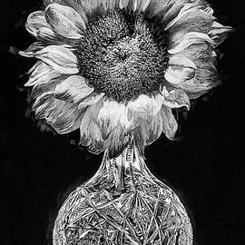 Sunflower Still Life Black And White by JC Findley
