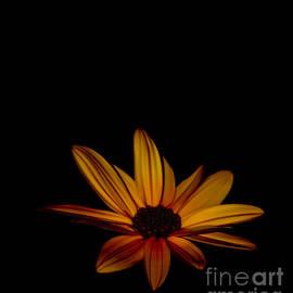 Sunflower Sublime by Debra Banks