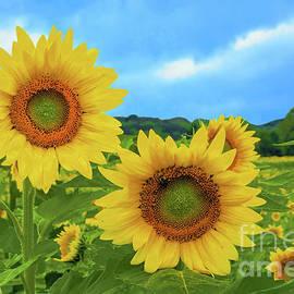 Sunflower Vista New Jersey by Regina Geoghan