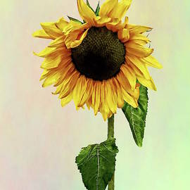 Sunflower With Peakaboo Bangs by Susan Savad