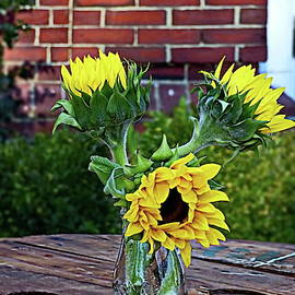 Sunflowers in Vase by Lyuba Filatova