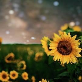 Sunflowers Under Milky Way by Dustin Goodspeed