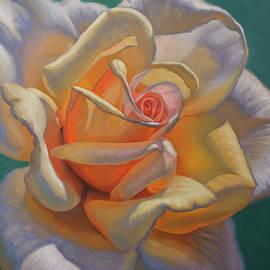 Sunlit Rose 1 by Fiona Craig
