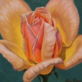 Sunlit Rose 6 by Fiona Craig