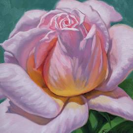 Sunlit Rose 7 by Fiona Craig