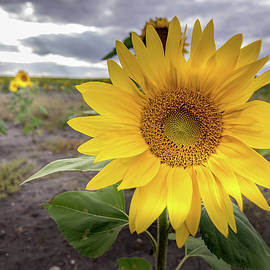 Sunny Day by Janet Schill
