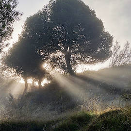 Sunrays through the foggy forest. Sierra Nevada by Guido Montanes Castillo