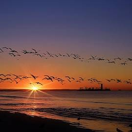 Sunrise, 7th Pl. Long Beach Calif. by John R Williams
