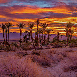 Sunrise - Borrego Springs by Peter Tellone