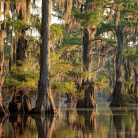 Sunrise in the swamps of Caddo Lake, Texas by Martin Podt