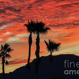 Sunrise With Silhouetted Palm Trees by Robert Bales