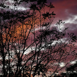 Sunset 10082019 #1 by Michael Hills