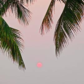 Sunset And Palm, Koh Chang,thailand by John W Banagan