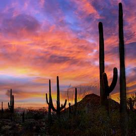 Sunset at Saguaro National Park by Barbara Manis