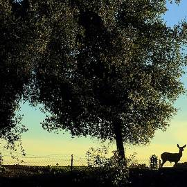 Sunset Doe by Danielle Rosaria