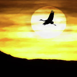 Sunset Flyway by Scott Bourne