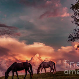 Sunset Grazing Horses by Thomas R Fletcher