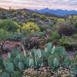 Sunset In The Desert Springtime by Dave Dilli