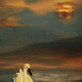 Rebecca Cozart - Sunset Swim