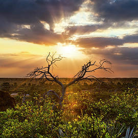 Sunset Tree by Debra and Dave Vanderlaan