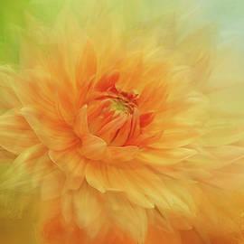 Sunshine Dahlia by Terry Davis
