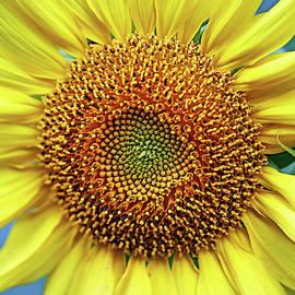 Sunshine In The Garden by Debbie Oppermann
