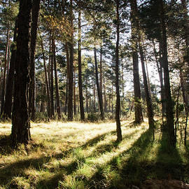 Guillermo Lizondo - Sunshine in the woods