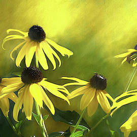Sunshine On Black Eyed Susan by Leslie Montgomery