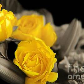 Sunshine Roses by Cory Brewington