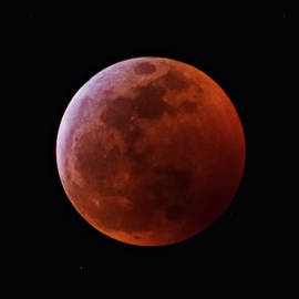 Super Blood Wolf Moon by Larah McElroy