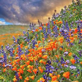 Superbloom Wildflower Sunset by Lynn Bauer