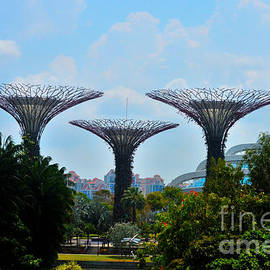 Supertrees conservatory and dragonfly lake Gardens by the Bay park Singapore by Imran Ahmed