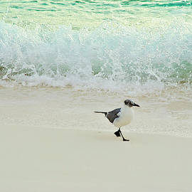 Surfide Seagull Stroll by Jill Love
