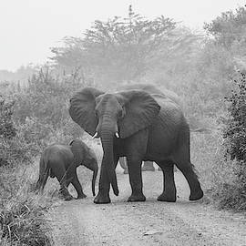 Surprise Encounter, Black and White by Marcy Wielfaert