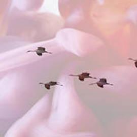 Surreal Sandhills Flying In Formation by Carol Groenen